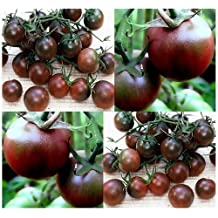 Buy 2 get 1 free Organic rare Black Cherry Tomato 25+ Seeds non-gmo fresh from 2016, plentiful clusters of juicy sweet deep red tomatoes with a blackish hue