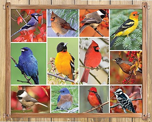 Springbok Alzheimer & Dementia Jigsaw Puzzles - Songbirds - 100 Piece Jigsaw Puzzle - Large 23.5 Inches by 18 Inches Puzzle - Made in USA - Extra Large Easy Grip Pieces Bird Jigsaw Puzzles