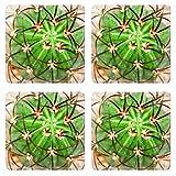 Luxlady Natural Rubber Square Coasters IMAGE ID: 24171703 Cactus Melocactus diersianus