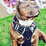 No Pull Dog Harness, Babyltrl Front Range Dog Vest Harness Adjustable Easy Walk