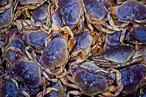 - Alaskan Crabs Wallpaper Wall Mural - Self-Adhesive - Multiple Sizes - National Geographic Image from Magic Murals
