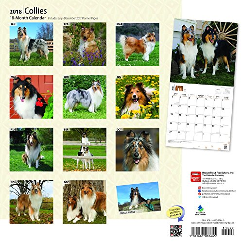Collies 2018 Monthly Square Wall Calendar Photo #3