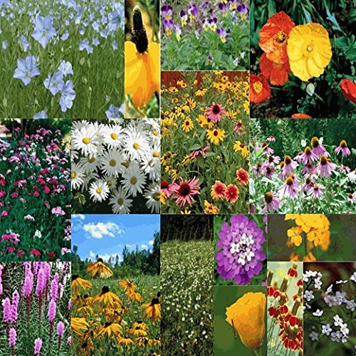 Perennial Low Grow Wildflower Seed Mix - 10 Lb