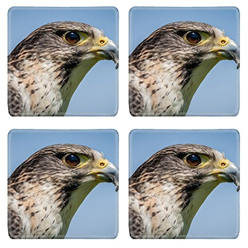 Luxlady Square Coasters Non-Slip Natural Rubber Desk Coasters ID: 41175851 Close up head portrait of a pere saker falcon hybrid against a natural blue sk (Hybrid Square Head)