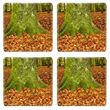 MSD Square Coasters Non-Slip Natural Rubber Desk Coasters design 34427582 Stain Resistance Kit Kitchen Table Top Desk C English Beech Forest in Autumn with close up of a moss covered trunk surrou