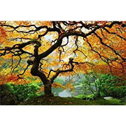 Startonight Wall Art Canvas Maple Tree, Nature USA Design for Home Decor, Dual View Surprise Artwork Modern Framed Ready to Hang Wall Art 23.62 X 35.43 Inch 100% Original Art Painting
