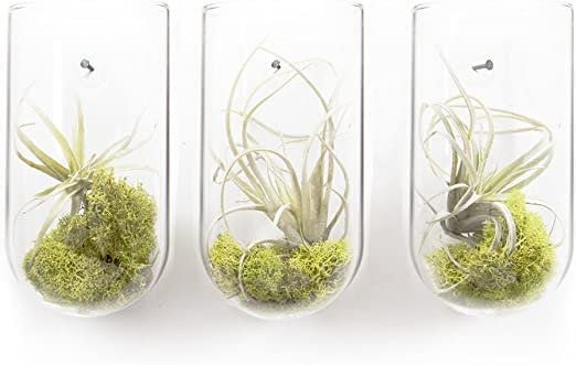 Amazon Com Chive Set Of 3 Hudson Modern And Versatile Glass