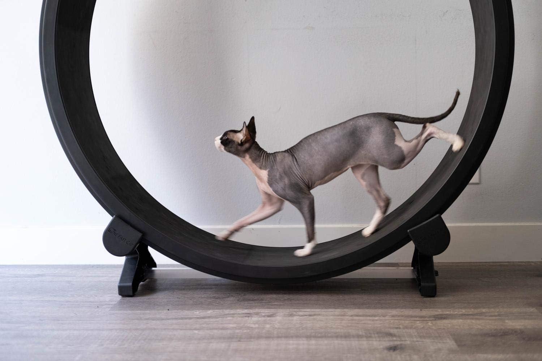 Un gato rápida Ejercicio rueda: Amazon.es: Productos para mascotas