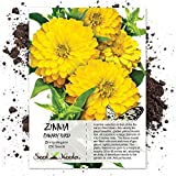 Seed Needs, Canary Bird Zinnia (Zinnia elegans) 250 Seeds