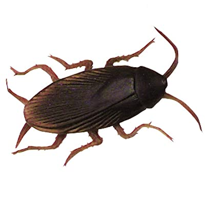 Fake Cockroach - 1 Each: Toys & Games