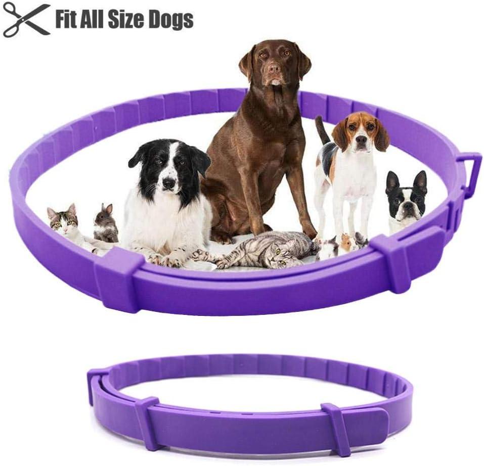 Pet Collars Or Seatbelts , Dog Collars for Small Medium Dogs , Cat Collars, Calming Cat Comforting Collar, Purple,62cm