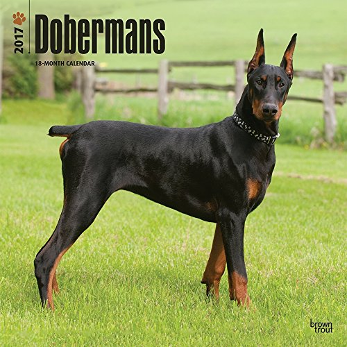 Dobermans 2017 Wall Calendar