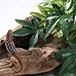 SLSON Reptile Plants Hanging Terrarium Plants Fake Reptiles Climbing Plant for Bearded Dragons,Lizards,Geckos,Snake Pets and Hermit Crab Tank Habitat Decorations,Large Size,20 inches 13