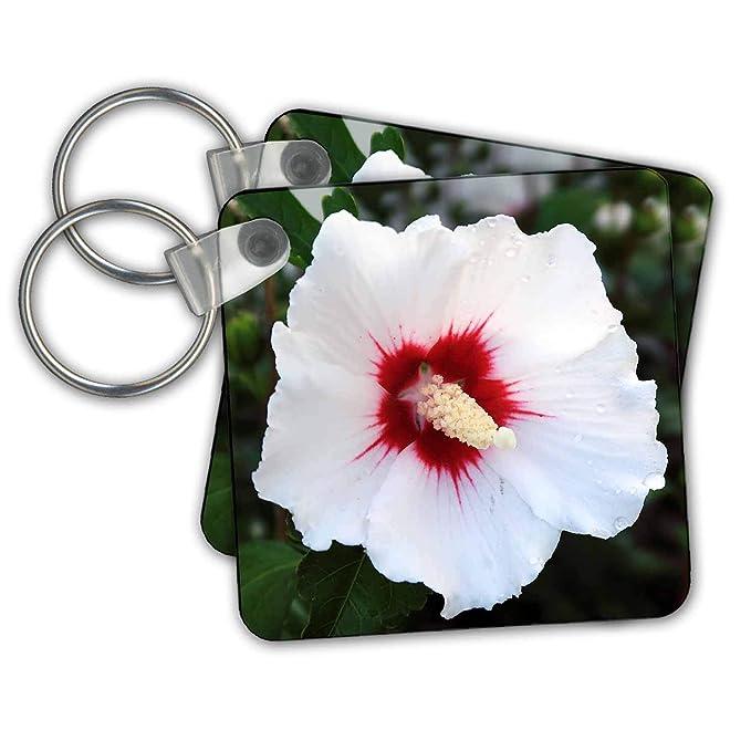 Amazon.com: 3dRose Stamp City – Flores – Fotografía de una ...
