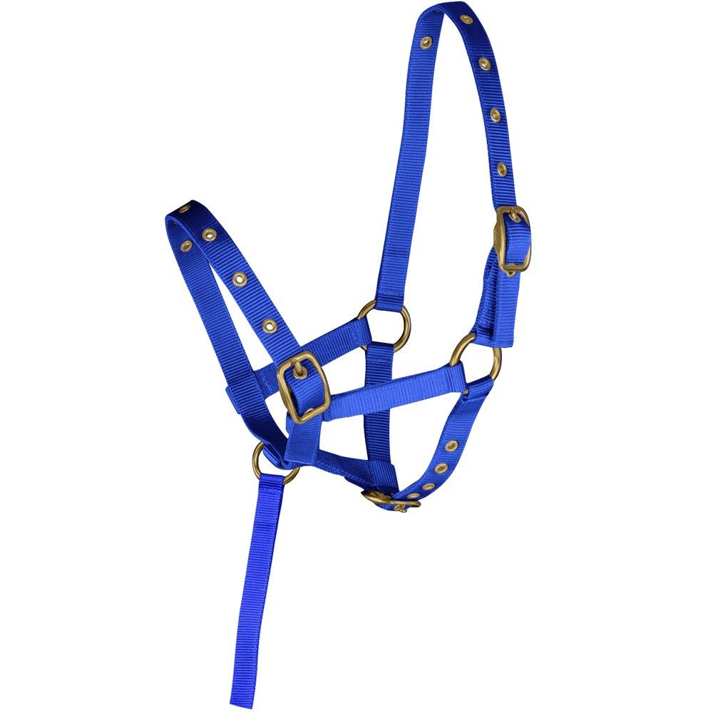 Knight Rider Soft Nylon Fully Adjustable Mini Foal Head Collar//Headcollar AND Tigerbox/® Antibacterial Pen!