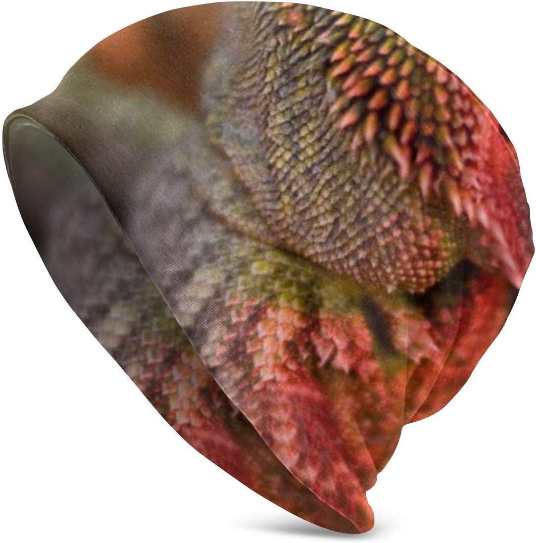 Viplili Gorro de Abrigo, Fire Beard Dragon Lizard Unisex Slouchy Beanie Skull Cap Stretchy Baggy Oversized Gorro de Punto