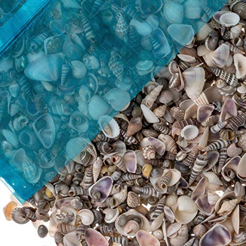 Tiny Miniature Fairy Garden Sea Shell Assorted Mix | Tiny Small Sea Shells for Craft and Decoration | Plus Free Nautical Ebook by Joseph Rains (16 Ounces, 1,500+) -