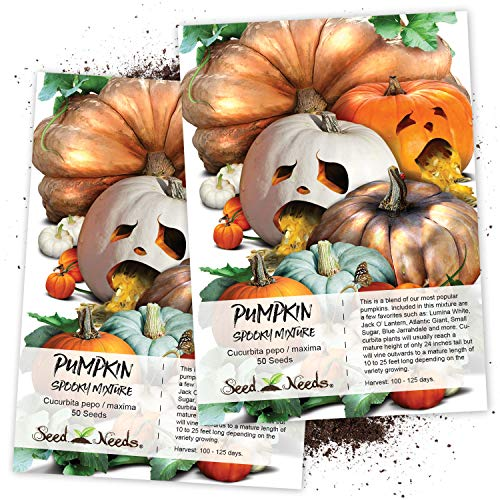 Seed Needs, Spooky Pumpkin Mixture (Cucurbita Pepo/Maxima) Twin Pack of 50 Seeds Each Non-GMO (Best Pumpkin Seeds To Plant)