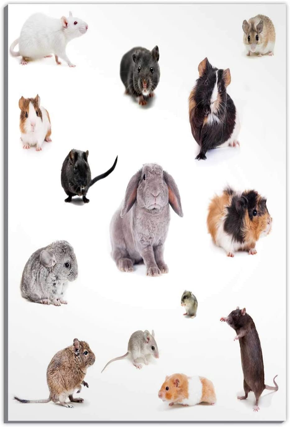 Set Different Spieces Rodents Isolated On,Couple Gifts,Room Decorations for Bedroom,16''x19''