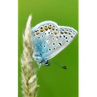 Notebook: Common blue butterfly butterflies insect wing caterpillar moth larva pupa...