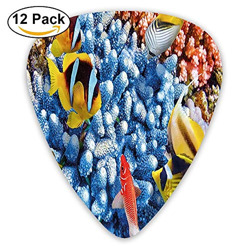 (Aquatic Caribbean Underwater Sea With Tropical Fishes And Coral Guitar Picks 12/Pack Set)