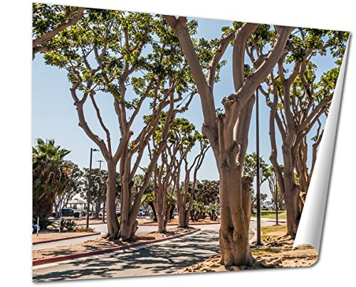 Ashley Giclee Fine Art Print, Coral Trees Lining A Street At Embarcadero Park South In San Diego California, 16x20, - Springs The Promenade Coral