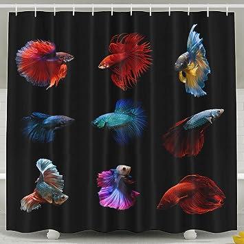 fdlb Betta peces siameses lucha contra peces Betta splendens Acuario momento de Siamese Fighting Fish cortina