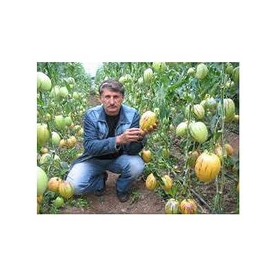CANHOT Seeds - Pepino Melon Pear Seeds Solanum Muricatum Melon Pear Fruit Seeds Home Garden Bonsai Plant DIY Courtyard Outdoor Plant Fruit Seeds, 100pcs : Garden & Outdoor