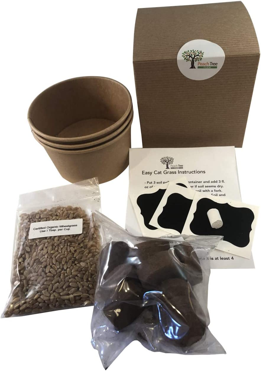 3 Pack Includes Certified Organic Non GMO Wheatgrass Seed Just Add Water Cups Easy Cat Grass Kit Chalkboard Labels /& Chalk Fiber Soil Your Pets Will Love This.