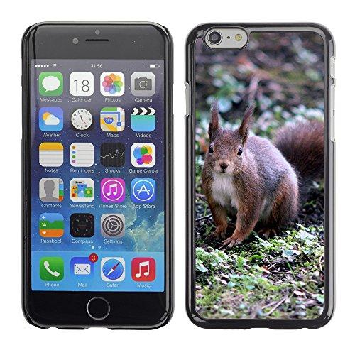 """Premio Sottile Slim Cassa Custodia Case Cover Shell // F00029855 Écureuil // Apple iPhone 6 6S 6G PLUS 5.5"""""""