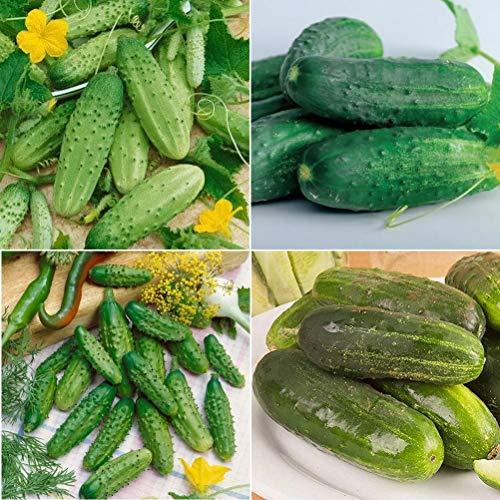 David's Garden Seeds Collection Set Cucumber Pickling Hybrid UM9234 (Green) 4 Varieties 175 Seeds (Non-GMO, -
