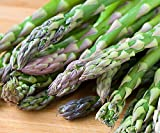 25 Asparagus Roots Jersey Supreme - MALE DOMINATE - TASTY