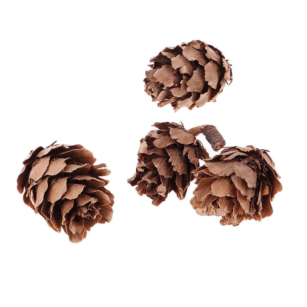 Sharplace 30 Pcs Naturel Petites Pommes De Pin En Vrac Pour Accents De D/écoration Ornement