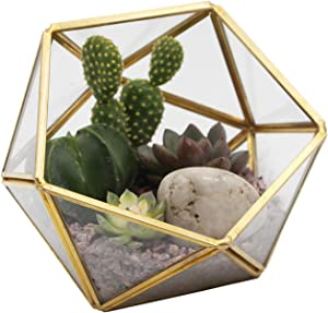 Kimdio Geometric Terrarium Clear Glass Tabletop Planter Air Plant Holder Display for Succulent Fern Moss Air Plants Holder Miniature Outdoor Fairy Garden DIY Gift