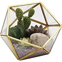 Kimdio Geometric Terrarium Clear Glass Tabletop Planter Air Plant Holder Display for Succulent Fern Moss Air Plants…