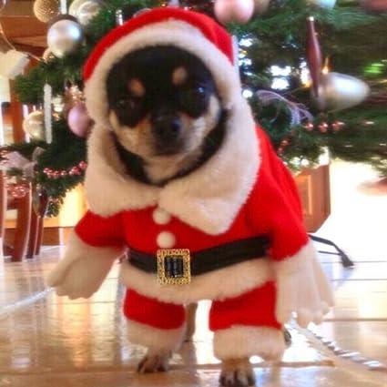 Nysunshine - Abrigo de Papá Noel, Disfraz de Navidad para Mascota, Gato, Perro