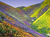 Search : Nature's Seed California Wildflower Blend, 500 sq. ft.