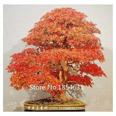 50pcs 24kinds for Chose New Rare Bonsai Tree Seeds - Apple Lemon Pinus Cherry Maple Kiwi Jasmine Bamboo Orange Tree Seeds