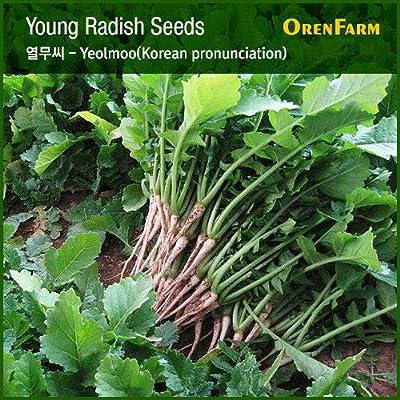 400 Korean honam Young Radish Seed(Subdivision), Korean Vegetable Seed,