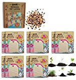 Greeting Cards   Flower Seeds  Personalized Cards   - Best Reviews Guide