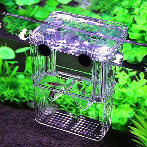PETS ISLAND Aquarium Fish Breeding Boxes Double Guppies Hatching Incubator Isolation Box (5.3 in) (Isolation Box)