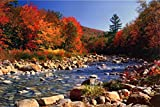 Autumn Brook Poster 36 x 24in