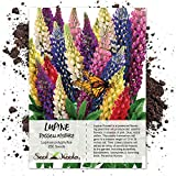 Package of 250 Seeds, Lupine Russell Mixture (Lupinus polyphyllus) Non-GMO Seeds by Seed Needs