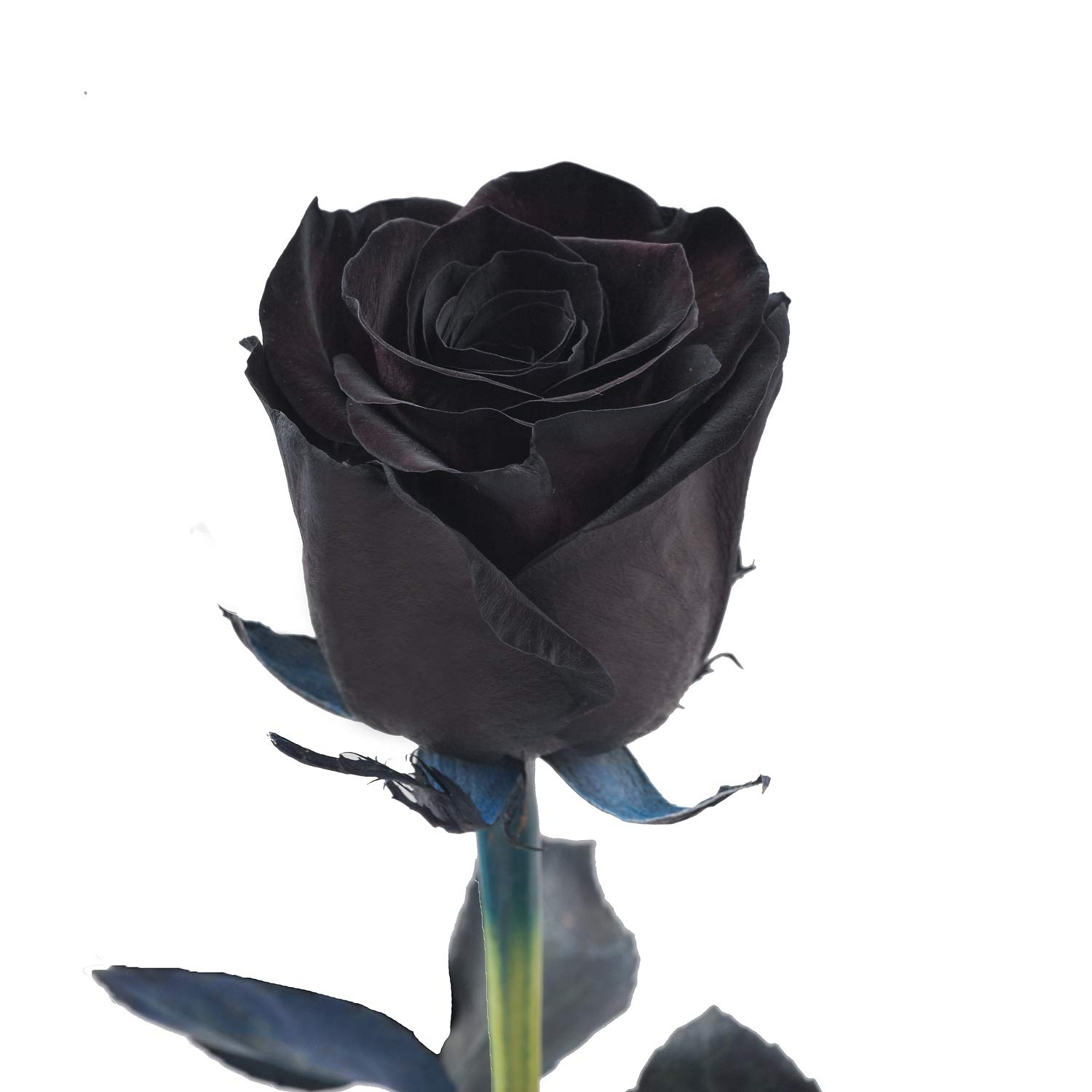 Amazon Com Farm Fresh Natural Tinted Black Roses 20 In 100 Stems Grocery Gourmet Food
