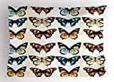 Lunarable Butterfly Pillow Sham, Summer Butterflies with Many Vibrant Colors Realistic Designs Romantic Animals, Decorative Standard King Size Printed Pillowcase, 36 X 20 inches, Multicolor