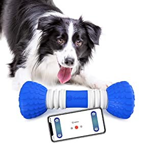 Smart Bone for Dog