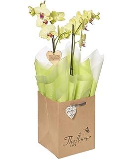 The Flower Rooms - Phalaenopsis Orchid Gift - Flower Gift