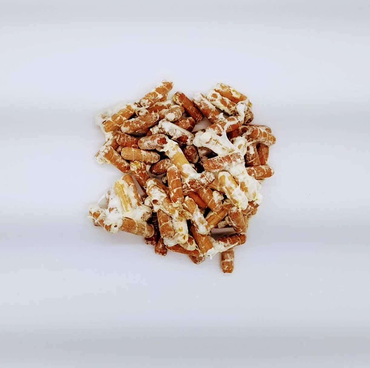 G1 or G2 Spawn Use to Grow on Straw or Sawdust Blocks 100 Lions Mane Mushroom Spawn Plugs to Grow Gourmet and Medicinal Mushrooms at Home or commercially