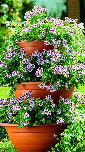 Sana Enterprises Three Tier Plant Stand, Progressively Sized Planters or Flower Pots, Terra-Cotta