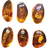 Vosarea 5pcs Amber Fossil with Insects Specimens Stones Samples Collection Home Decorations Oval Pendant (Random Pattern…